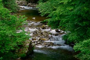 青屋川・飛騨川の支流 乗鞍橋より上流を望むの写真素材 [FYI03931500]