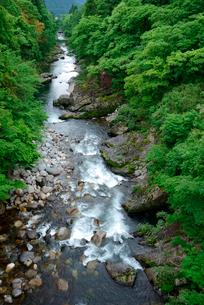 新緑の吉田川・市島大橋より下流を望む の写真素材 [FYI03931517]