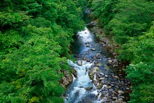 新緑の吉田川・上流を望むの写真素材 [FYI03931518]