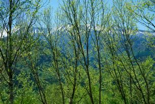新緑と御嶽山・御嶽パノラマラインより望む の写真素材 [FYI03931524]