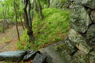犬山城 樅の丸石垣と空堀の写真素材 [FYI03931545]