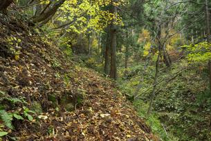 鷲見城遺跡 二の木戸付近の城道の写真素材 [FYI03931700]