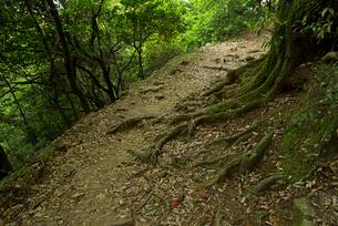 岐阜城 搦手道 瞑想の小径 登り口付近の写真素材 [FYI03931785]