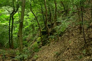 岐阜城 搦手道 瞑想の小径 道下の崖の写真素材 [FYI03931786]