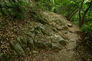 岐阜城 搦手道 瞑想の小径 中間点付近の写真素材 [FYI03931787]