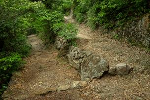 岐阜城 搦手道 瞑想の小径 つづら折りの道の写真素材 [FYI03931790]