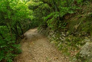 岐阜城 搦手道 瞑想の小径 登り口付近を下るの写真素材 [FYI03931792]
