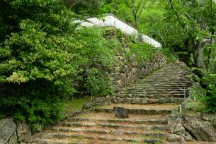 小倉山城 本丸門へ続く石段の写真素材 [FYI03931829]