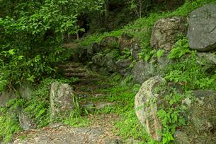 小倉山城 本丸より山上に続く城道の登り口の写真素材 [FYI03931837]