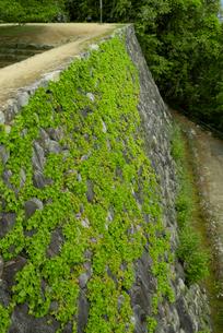 松坂城 きたい丸の石垣 隅櫓跡を望むの写真素材 [FYI03931889]