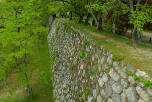 松坂城 きたい丸の石垣 隅櫓付近より藤見櫓跡を見るの写真素材 [FYI03931890]