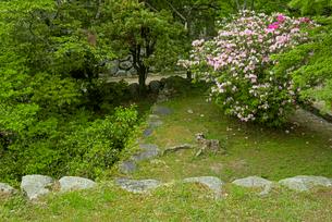 松坂城 鐘ノ櫓跡に咲くツツジの写真素材 [FYI03931891]