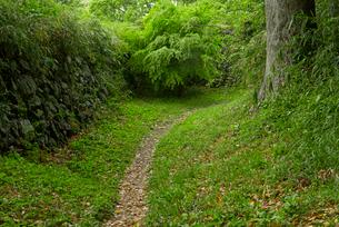 田丸城 本丸 左側 と北の丸 右側 を遮る堀の写真素材 [FYI03931921]
