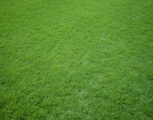 芝生の写真素材 [FYI03931922]