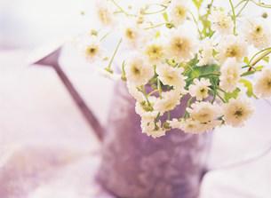 花の写真素材 [FYI03932102]