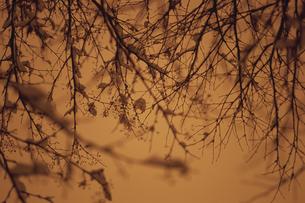 セピア色の冬の木々の写真素材 [FYI03932168]