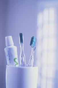 歯ブラシの写真素材 [FYI03932581]