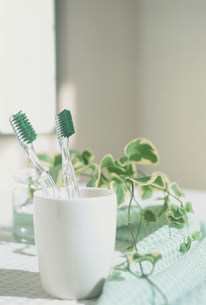 歯ブラシの写真素材 [FYI03932584]