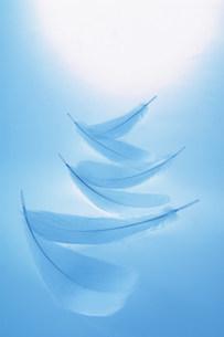 羽毛の写真素材 [FYI03932728]