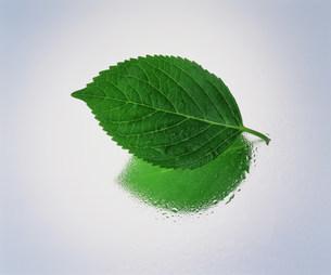 葉の写真素材 [FYI03933021]