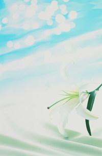 百合と水紋イメージの写真素材 [FYI03933085]