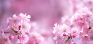 花の写真素材 [FYI03933380]