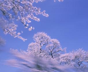 花と空の写真素材 [FYI03933382]