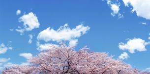 花と空の写真素材 [FYI03933383]