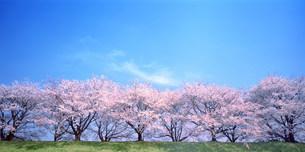 木と空の写真素材 [FYI03933391]