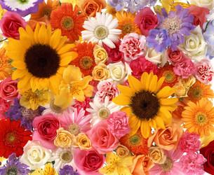 花の写真素材 [FYI03933396]