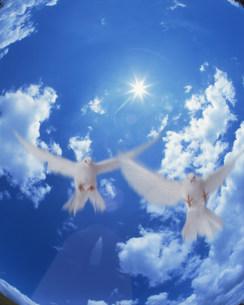 空を飛ぶ鳥の写真素材 [FYI03933398]