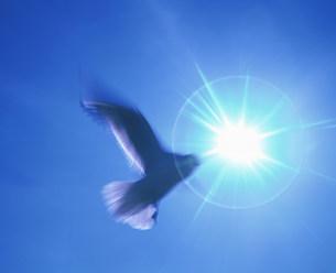 空を飛ぶ鳥の写真素材 [FYI03933407]