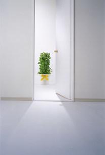 ドアの写真素材 [FYI03933435]