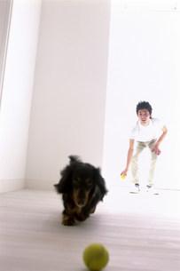 犬の写真素材 [FYI03933509]