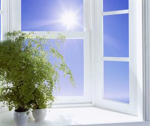 窓辺の観葉植物の写真素材 [FYI03933545]