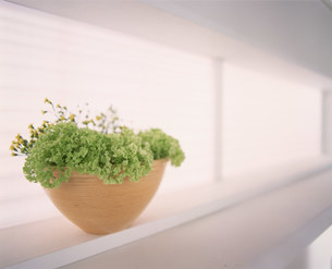 植物の写真素材 [FYI03933565]