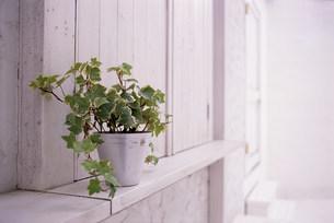 植物の写真素材 [FYI03933573]