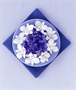 花のイメージの写真素材 [FYI03933617]