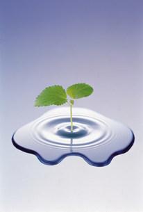 双葉と水滴のイラスト素材 [FYI03933690]