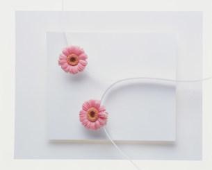 花の写真素材 [FYI03933765]