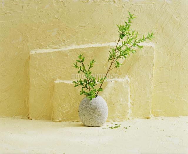 花瓶の枝の写真素材 [FYI03933855]