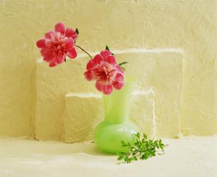 花瓶の花の写真素材 [FYI03933856]
