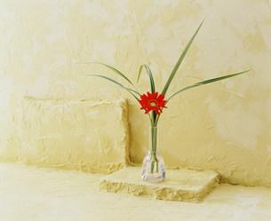 花瓶の花の写真素材 [FYI03933857]
