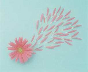 花の写真素材 [FYI03933866]