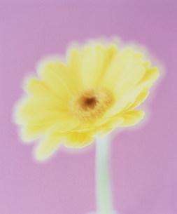 花の写真素材 [FYI03933867]