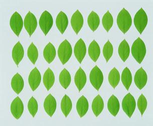 葉の写真素材 [FYI03933871]