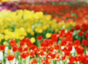 花の写真素材 [FYI03933886]