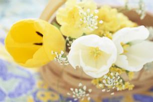 花の写真素材 [FYI03933921]