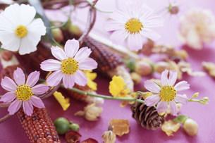 花の写真素材 [FYI03933929]