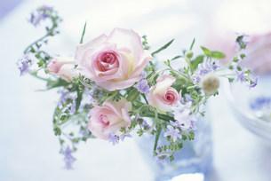 花の写真素材 [FYI03933932]